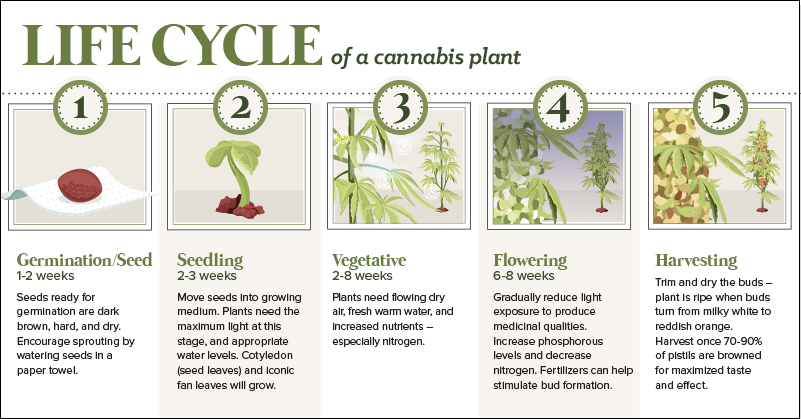 the anatomy of a cannabis plant, and its lifecycle Cycletree Life anatomy cannabis plant share